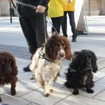 Sniffer dogs help crack down on illegal tobacco in Wales