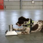 Wales' top tobacco sniffer dog faces death threats from criminal gang
