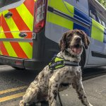 Scamp the sniffer dog uncovers illegal tobacco haul in Powys