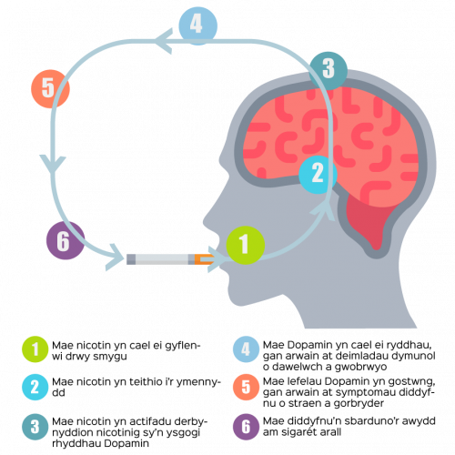 brain-graphcwelsh